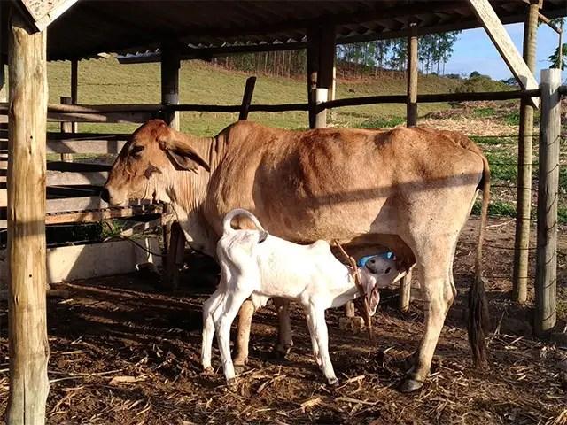 Custo de produção de leite tem alta recorde em setembro