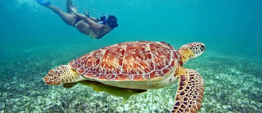 Mergulho com tartarugas em Akumal