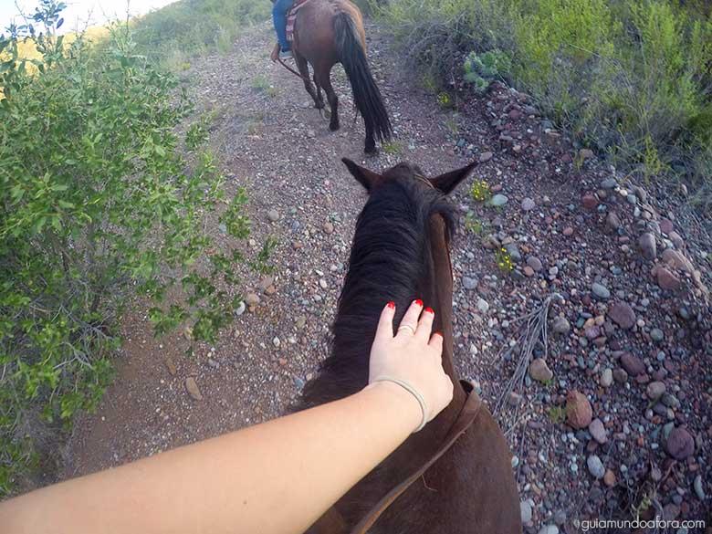 Carinho no cavalo