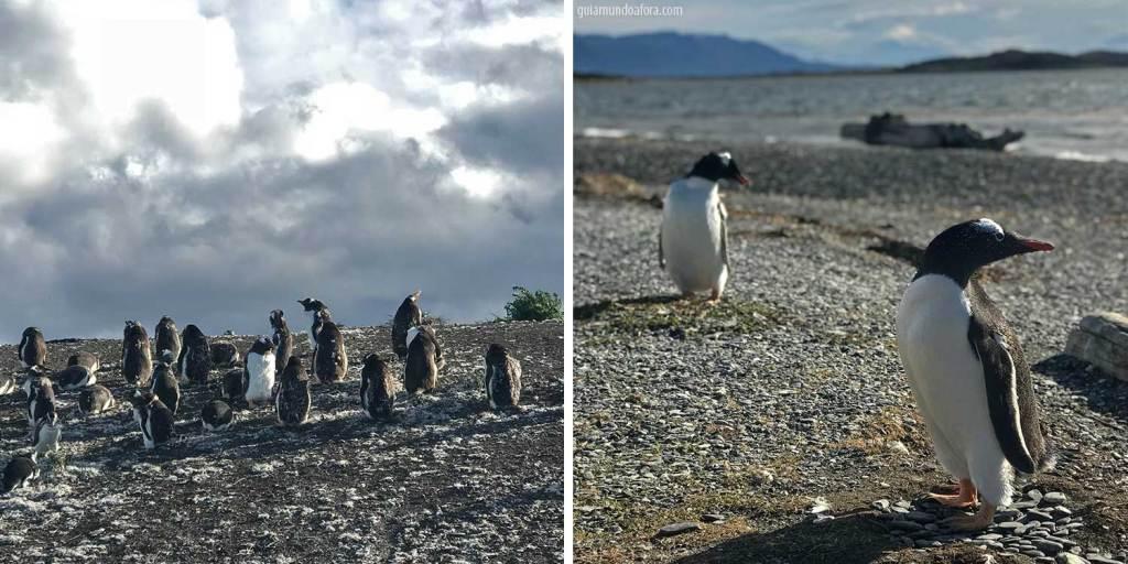 pinguins em ushuaia