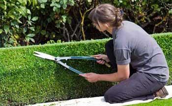 Servicios de jardinería en Valladolid