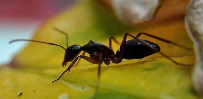 Control de hormigas Madrid