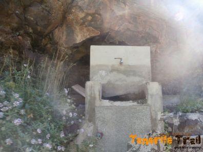Grifo en el barranco de Valleseco (el más lejano)