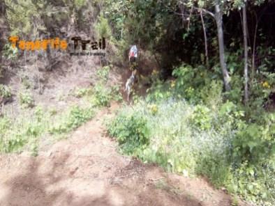 Sendero a mano derecha que sale de la pista del Rayo (foto 8