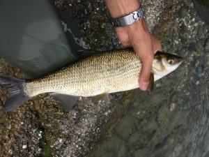 pescare le savette
