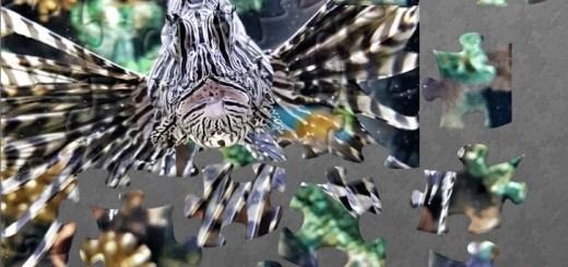 Puzzle fish