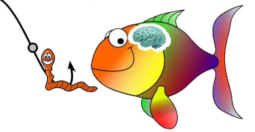 I PESCI SONO FURBI O E' SOLO ISTINTO? - La guida del pescatore