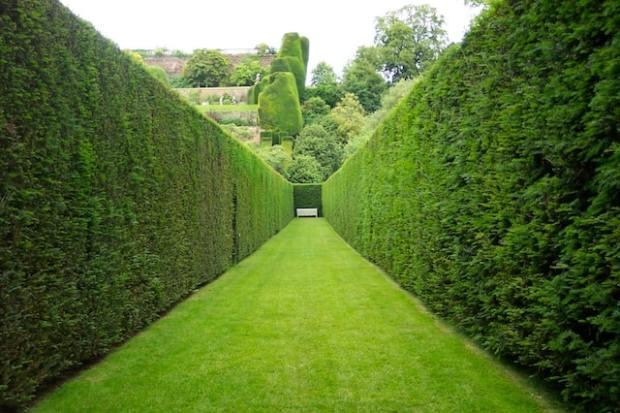 siepi-per-giardino