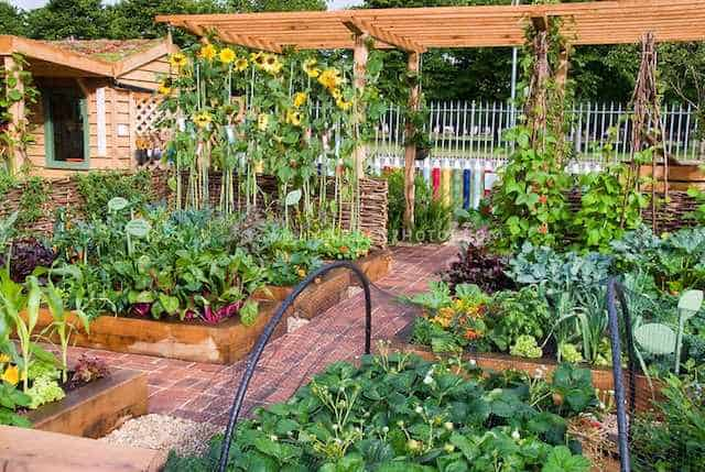Vegetable, fruit, flower garden with crayon fence