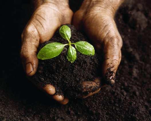 giardinaggio organico