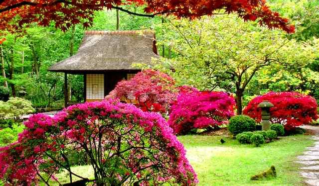 giardinaggio per principianti