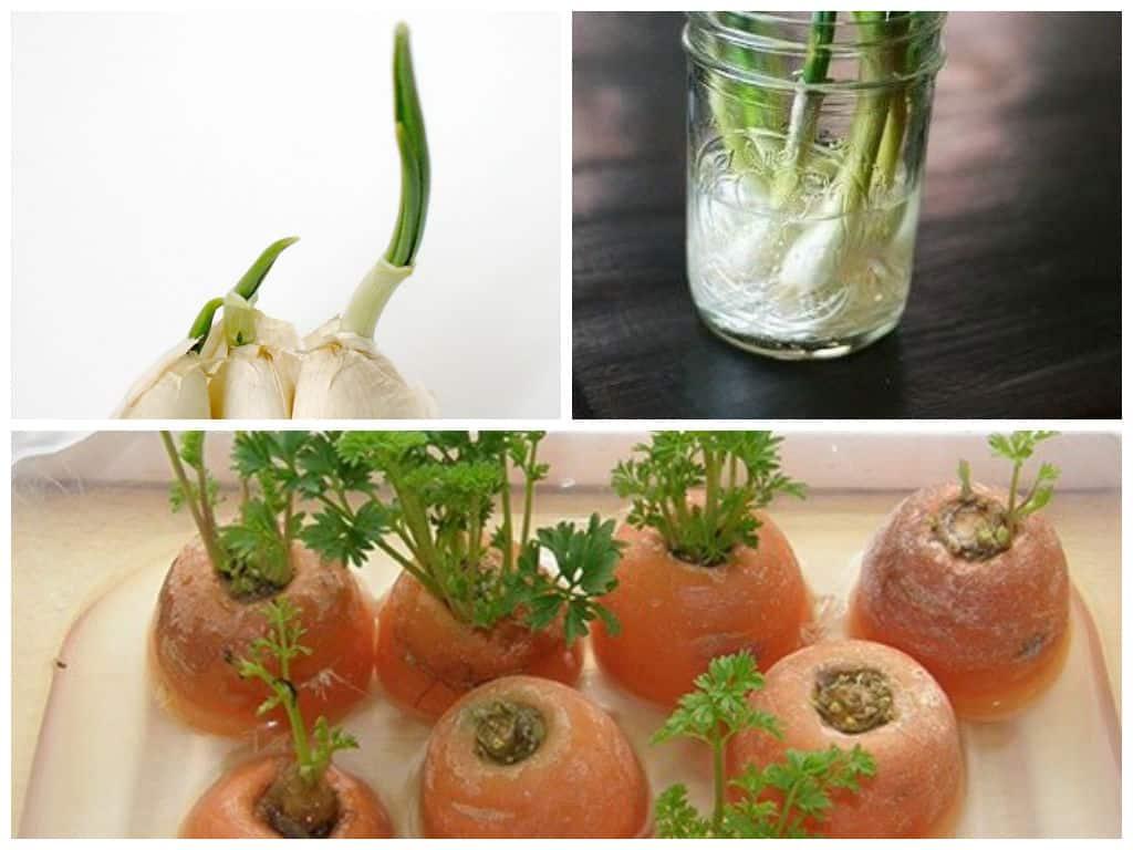 le 10 verdure che puoi comprare una volta e riutilizzare