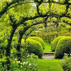 Curare il giardino: suggerimenti e trucchi