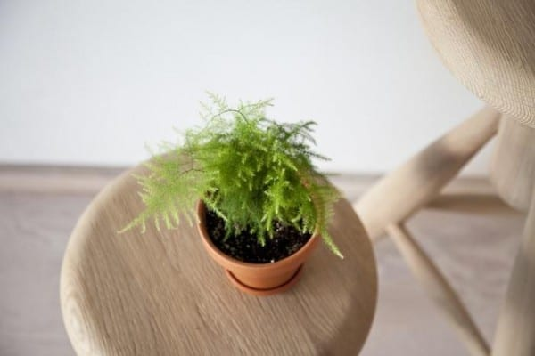 Mini piante da appartamento