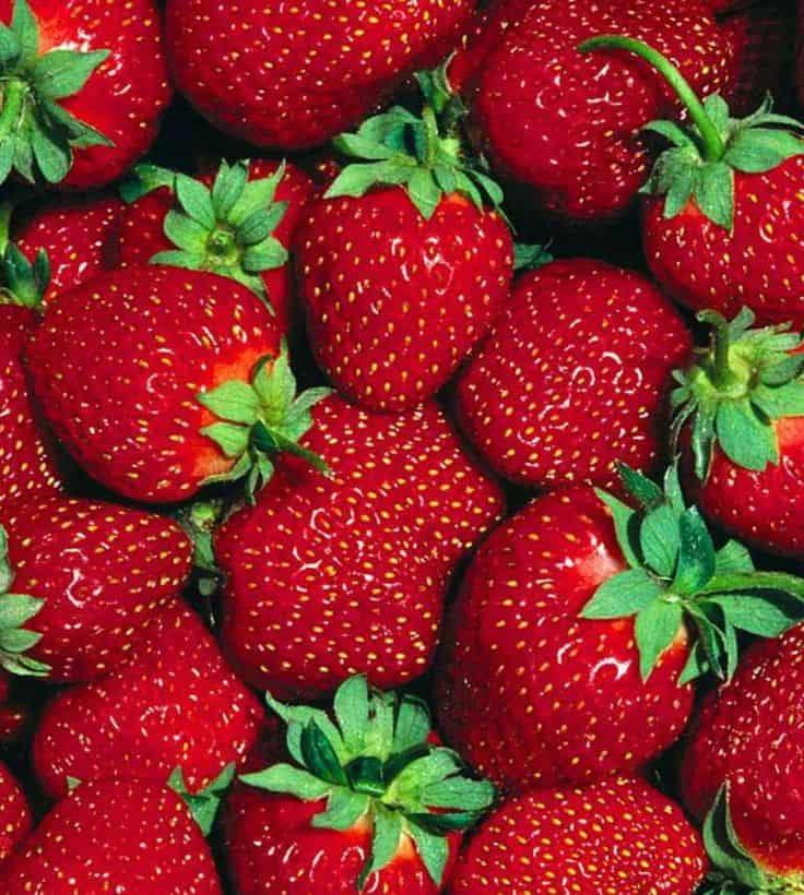 9 consigli per coltivare le fragole