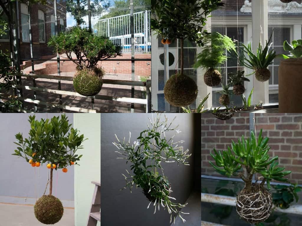 Come Potare A Palla come realizzare un kokedama: piante pensili senza vaso