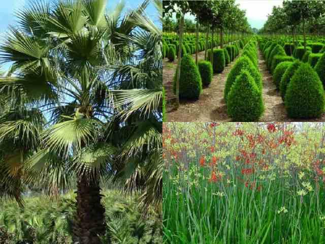 5 piante che sopportano la siccit guida giardino - Grossi fiori da giardino ...