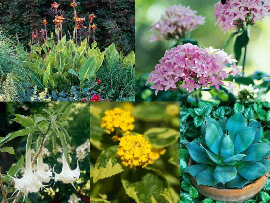 11 piante fiorite ideali per le estati più calde