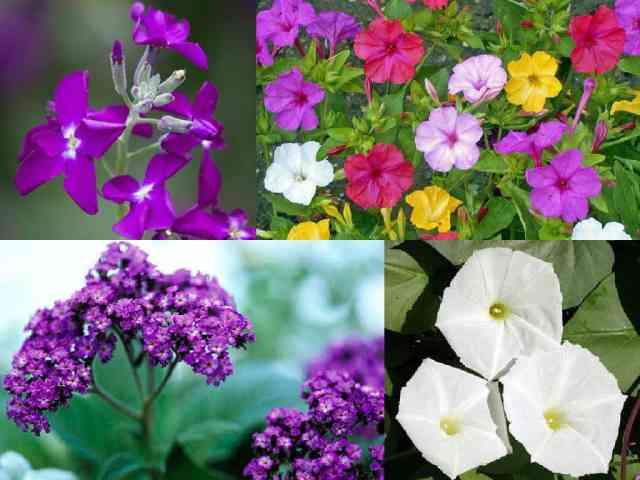 8 piante fiorite gradevolmente profumate guida giardino for Piante profumate da giardino