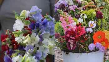 10 magnifici fiori da coltivare in pieno sole | Guida Giardino