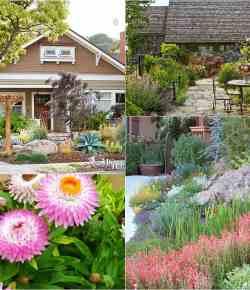 Lo xeriscaping: una forma di giardinaggio ecosostenibile (come creare)