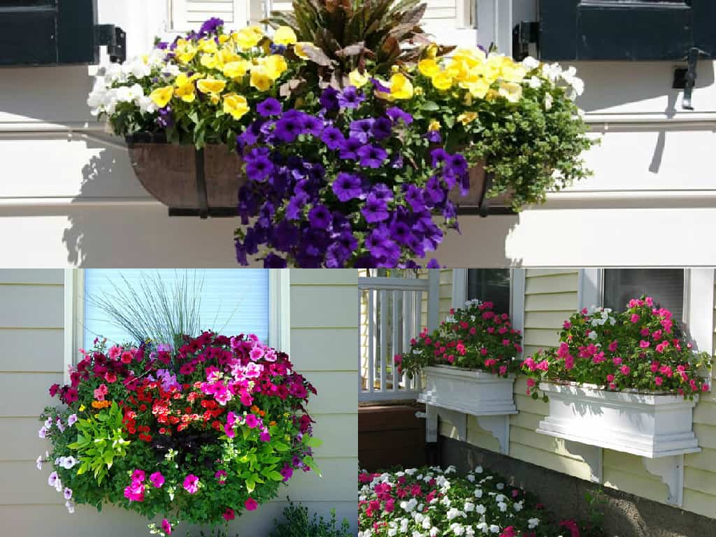 Finestre fiorite alcuni consigli guida giardino - Si espongono alle finestre ...