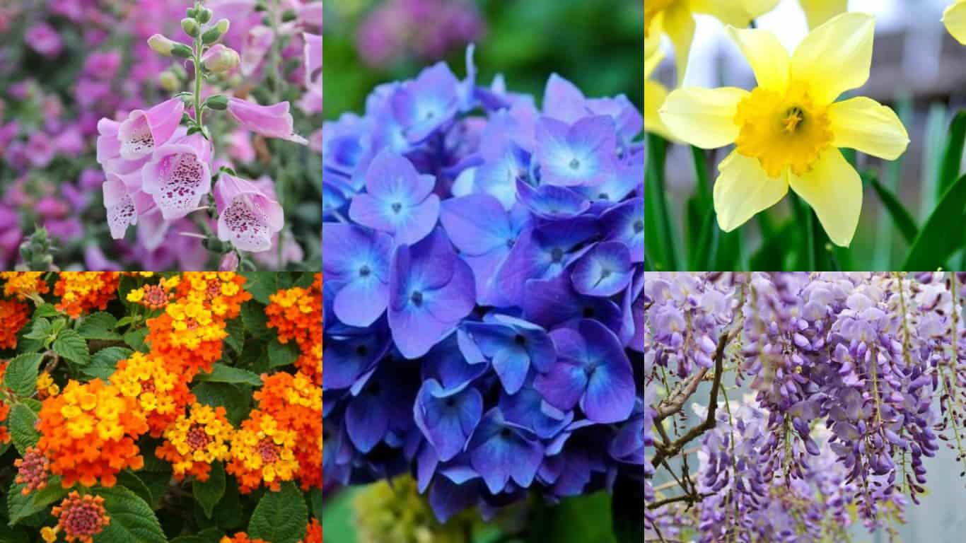 13 meravigliosi fiori velenosi