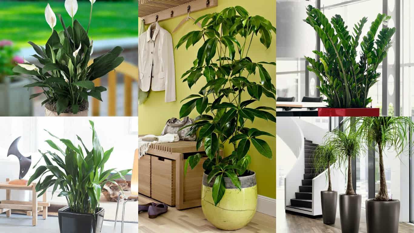 18 piante d'appartamento che non richiedono manutenzione ...