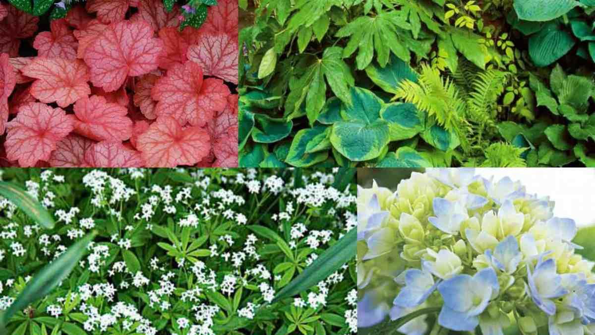 7 bellissime piante che crescono in ombra