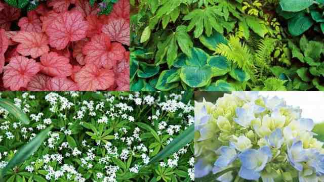 7 bellissime piante che crescono in ombra guida giardino for Cespugli fioriti perenni da giardino