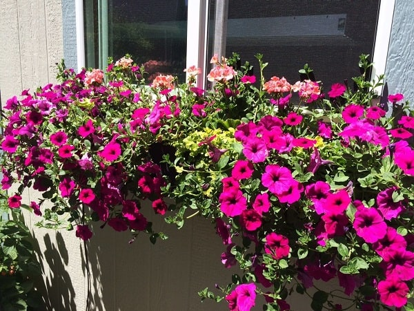 Decorare con le piante come preparare una fioriera da for Piante da fioriera