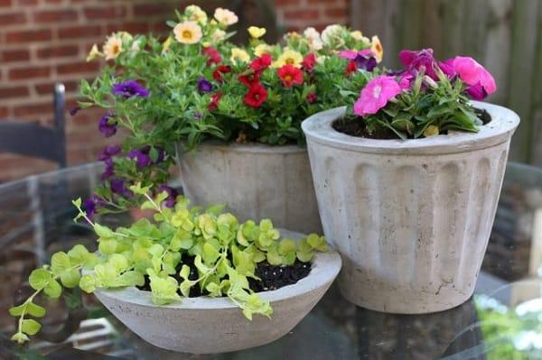 I Vasi Di Cemento Sono Molto Utilizzati A Scopo Decorativo E Sempre Più  Apprezzati Sia Per La Coltivazione Di Piccole Piante Fiorite Che Per Quella  Di ...