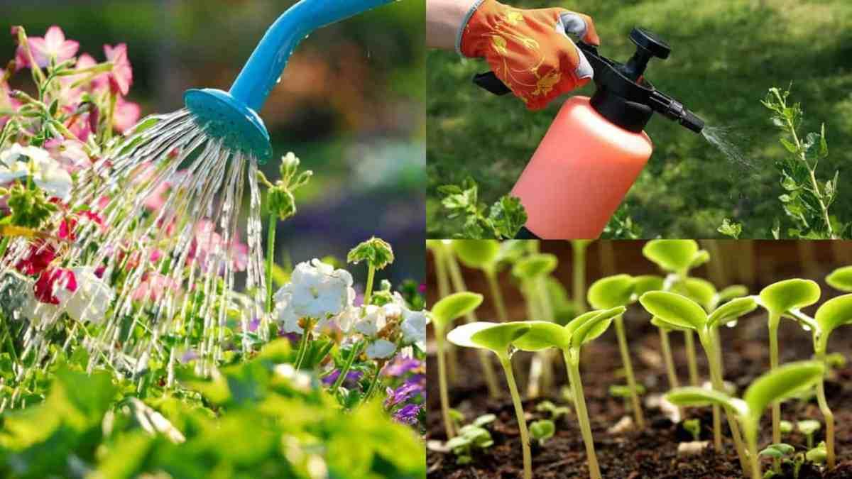 5 usi dell'acqua ossigenata in giardino