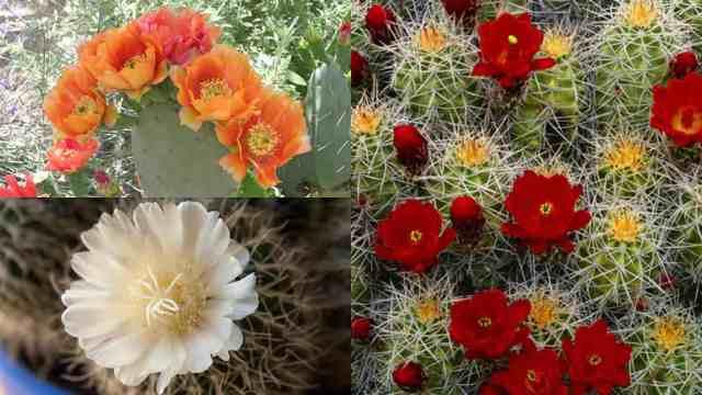 Far fiorire le piante grasse alcuni consigli guida giardino for Piante da esterno invernali