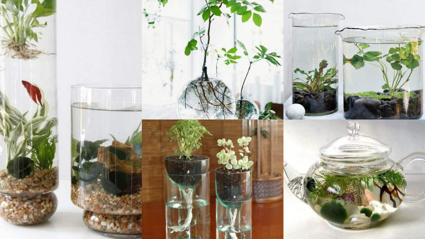 Beautiful 8 Idee Creative Per Realizzare Un Giardino Acquatico Indoor | Guida Giardino