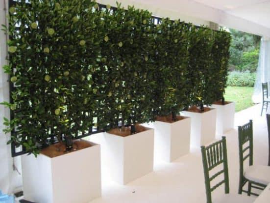 Siepi Da Giardino Crescita Veloce : Modi per aumentare la privacy del giardino utilizzando le piante