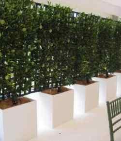 8 modi per aumentare la privacy del giardino utilizzando le piante