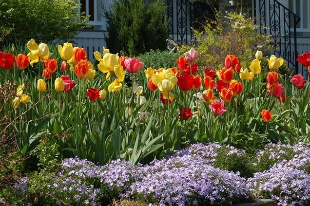 Decorare il giardino con le bordature floreali: 14 idee