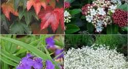 Piante resistenti: 8 specie ornamentali da coltivare nel giardino