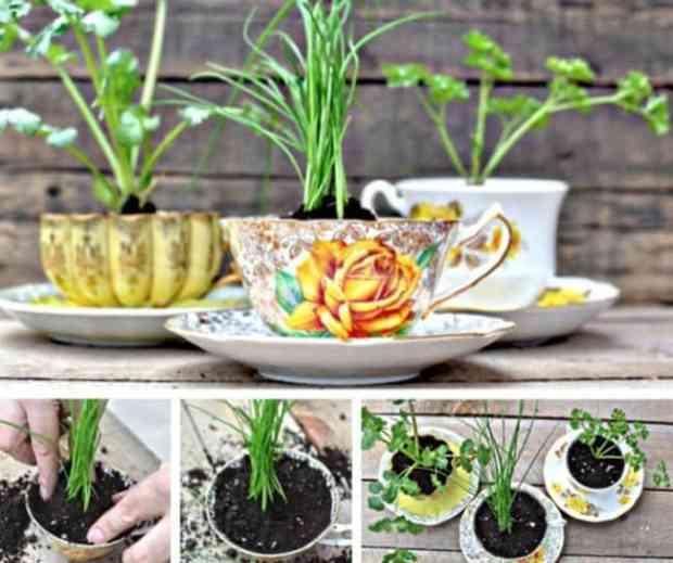 tazze da tè trasformate in vasi per le piante