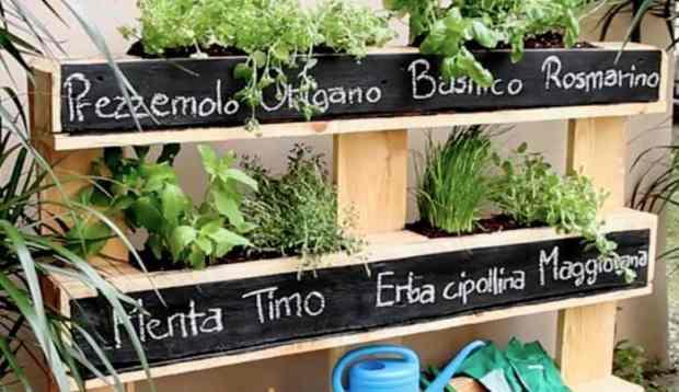giardino di erbe aromatiche