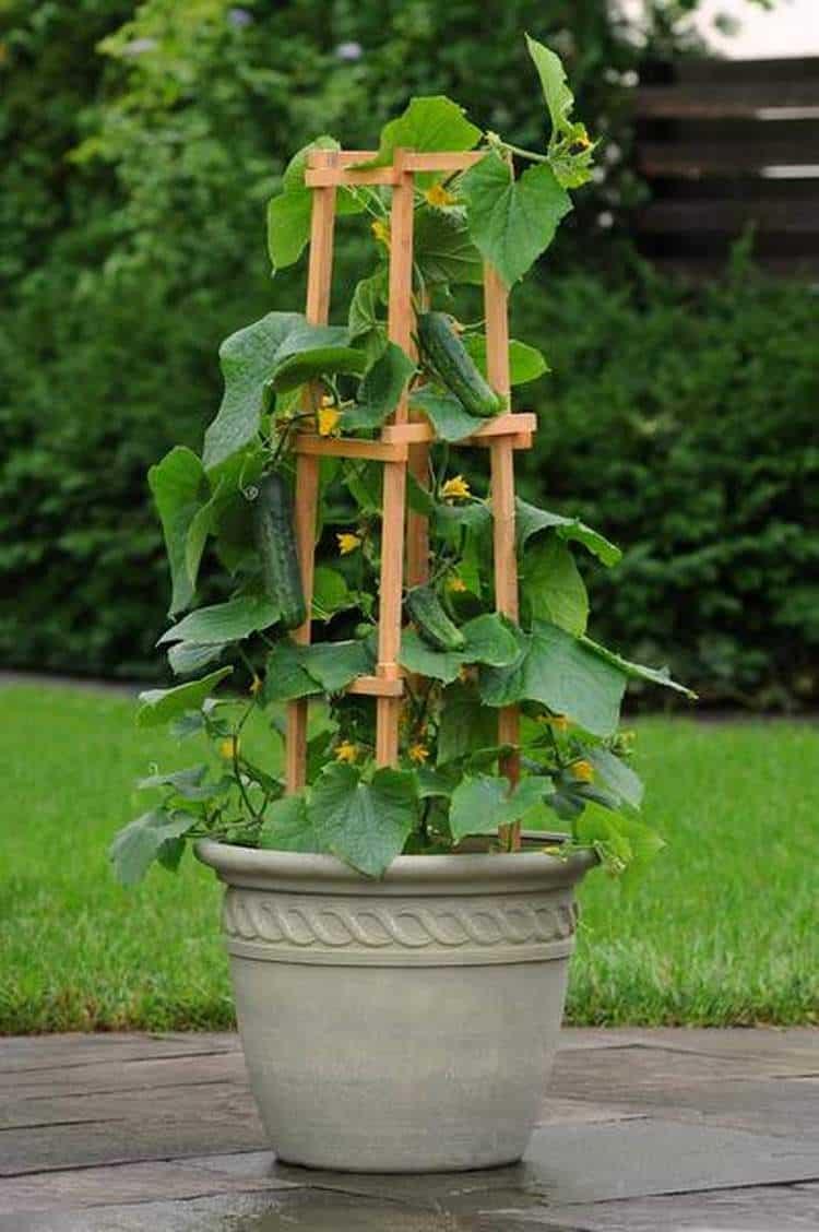 Coltivare Piselli In Vaso coltivare in vaso: 9 idee originali - guida giardino
