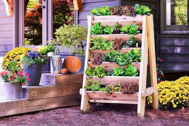 Guida Giardino | Consigli e fai da te per giardino, orto e terrazzo