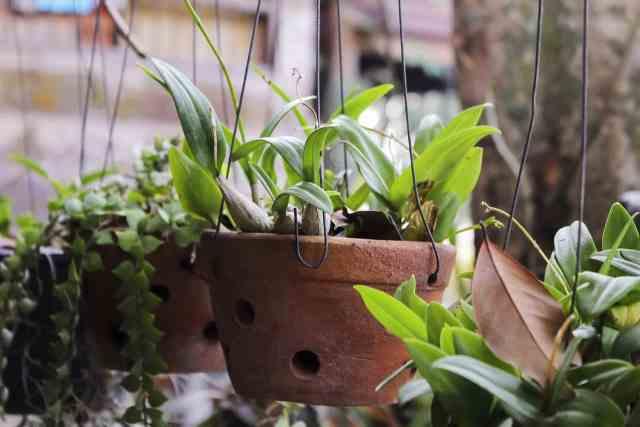 15 piante da tenere lontane da bambini e animali guida - Piante da tenere in camera da letto ...