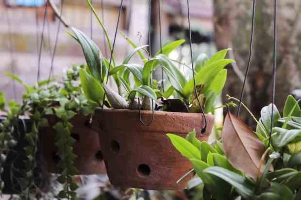 Purtroppo in natura ci sono molte piante che possono essere velenose, o comunque tossiche, per gli animali domestici e per i bambini piccoli