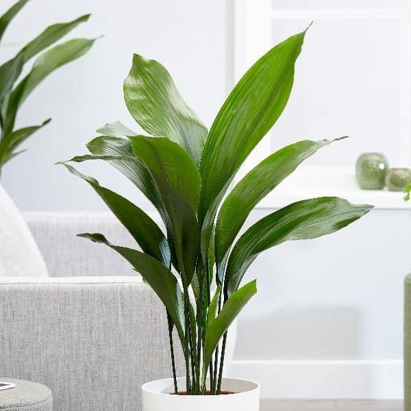 Piante Da Appartamento Al Buio.6 Piante Perfette Se Dentro Casa C E Poca Luce Guida Giardino