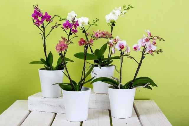 set di orchidee