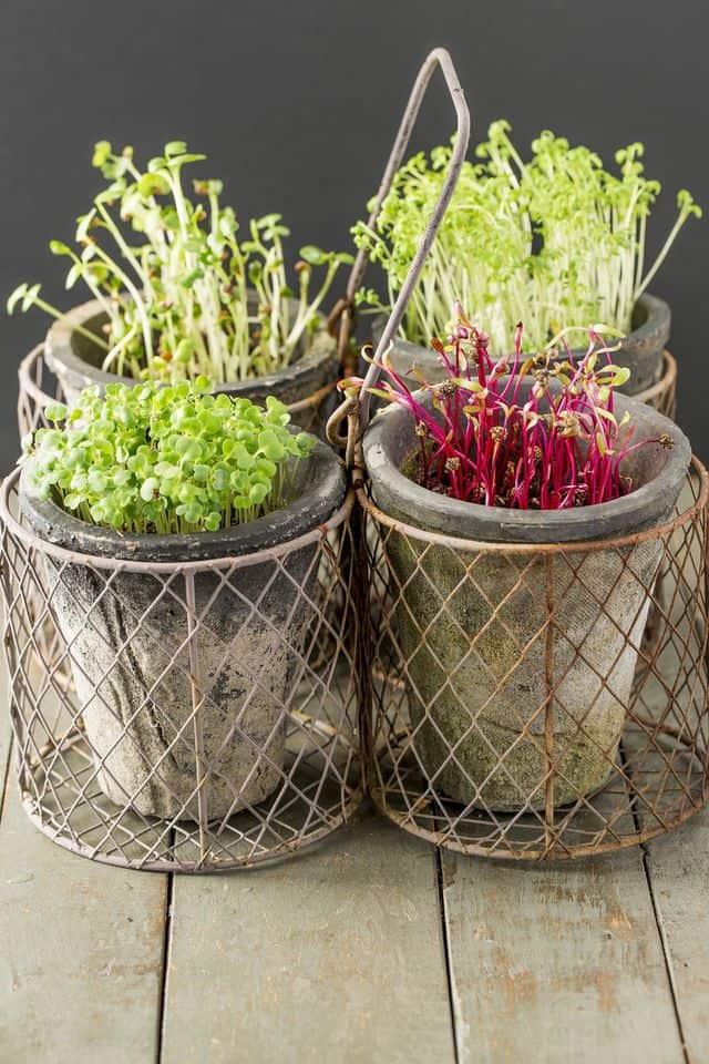 ortaggi che si possono coltivare dentro casa