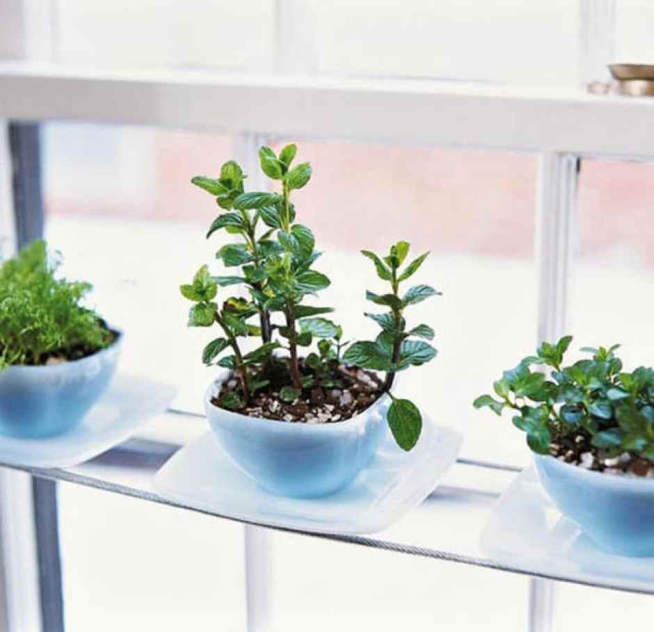 Da servizio da tè a vasi per le piante