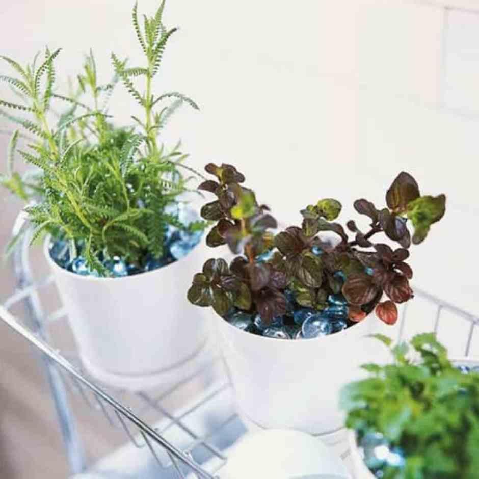 Felce, la classica pianta adatta per un ambiente umido come il bagno